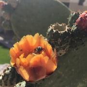 2nd May 2015 - Bee Happy
