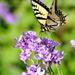 Illuminating Spring by genealogygenie