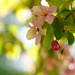 Under the Grab Apple Tree by tosee