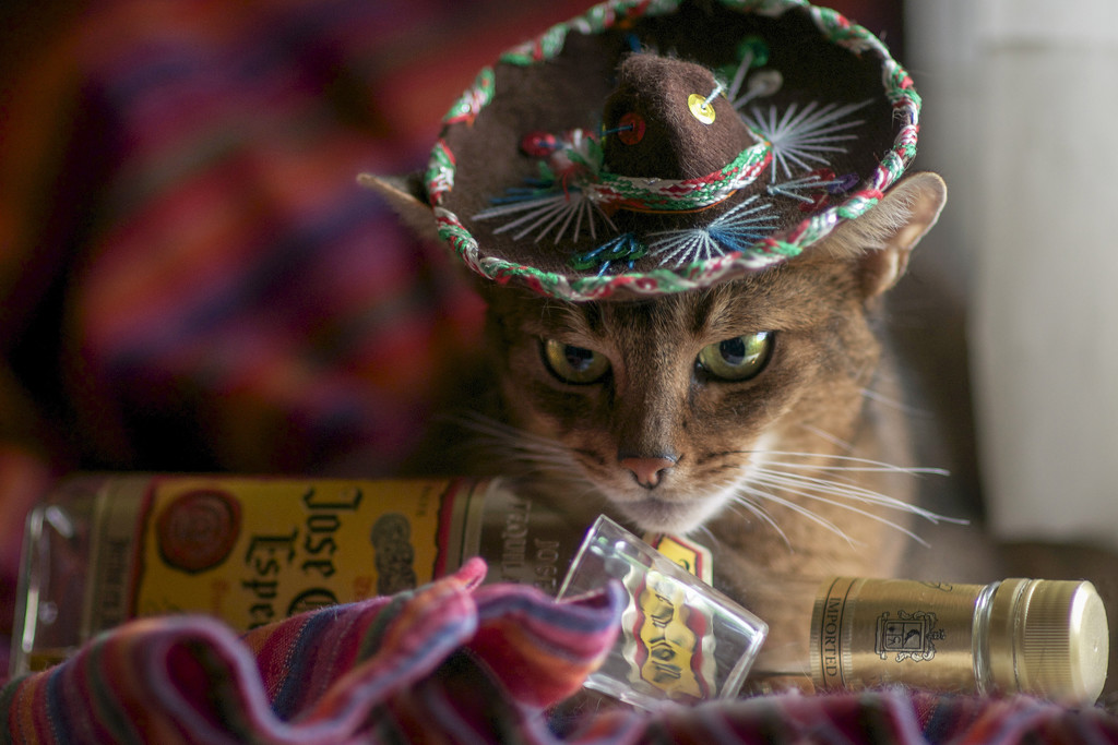 Happy Cinco-De-Mayo! by berelaxed