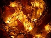 8th Nov 2010 - Winter decoration .