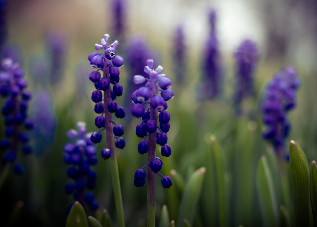 Bluebell find by tracymeurs