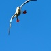 an obviously red-footed booby, incoming by mjalkotzy