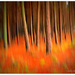 ICM   Forest on fire... by julzmaioro