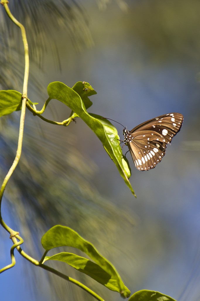 Butterfly by sugarmuser