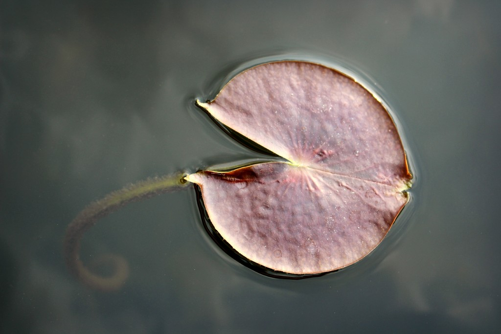 The Pond by juliedduncan