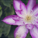 Trellis Beauty by lyndemc
