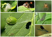 8th May 2015 - insects collage for the MFPIAC28