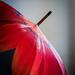 Wet Umbrella by rosiekerr