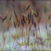 Garden Moss by jamibann