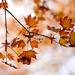Dancing leaves! by fayefaye
