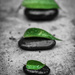 (Day 85) - Leaf Stones by cjphoto