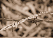 10th May 2015 - Barbed Wire