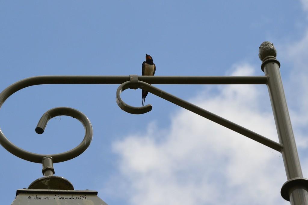 swallow by parisouailleurs