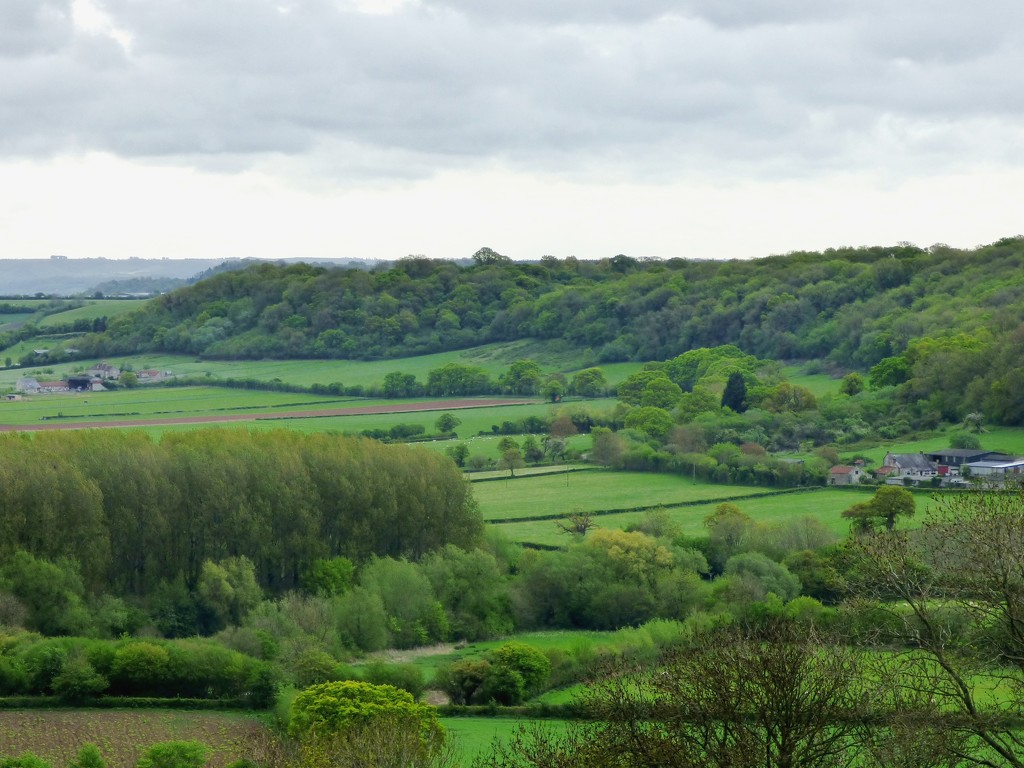 Spring towards Pitney Wood by julienne1