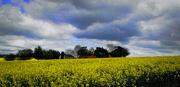 11th May 2015 - Canola and Big Skies (mobile phone shot)