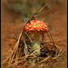 Who's been eating the toadstool? by dide