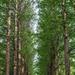 Nami Trees by jyokota