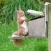 Sit up and beg by shirleybankfarm
