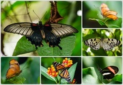 13th May 2015 - Butterfly Collage