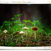 Forest fungi by dide