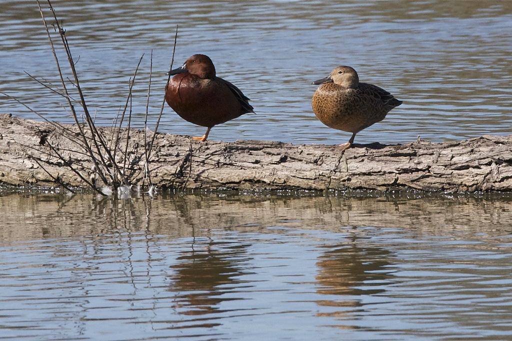 Water Fowl Not Foul Water by robv