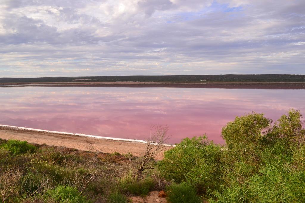 Pink Lake by ziggy77