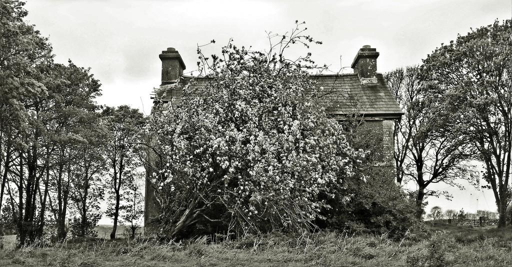 When a house  hides... by jack4john