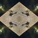 Pattern Dragonfly