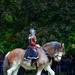 Shire Horses by vera365