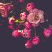 Pink by ukandie1