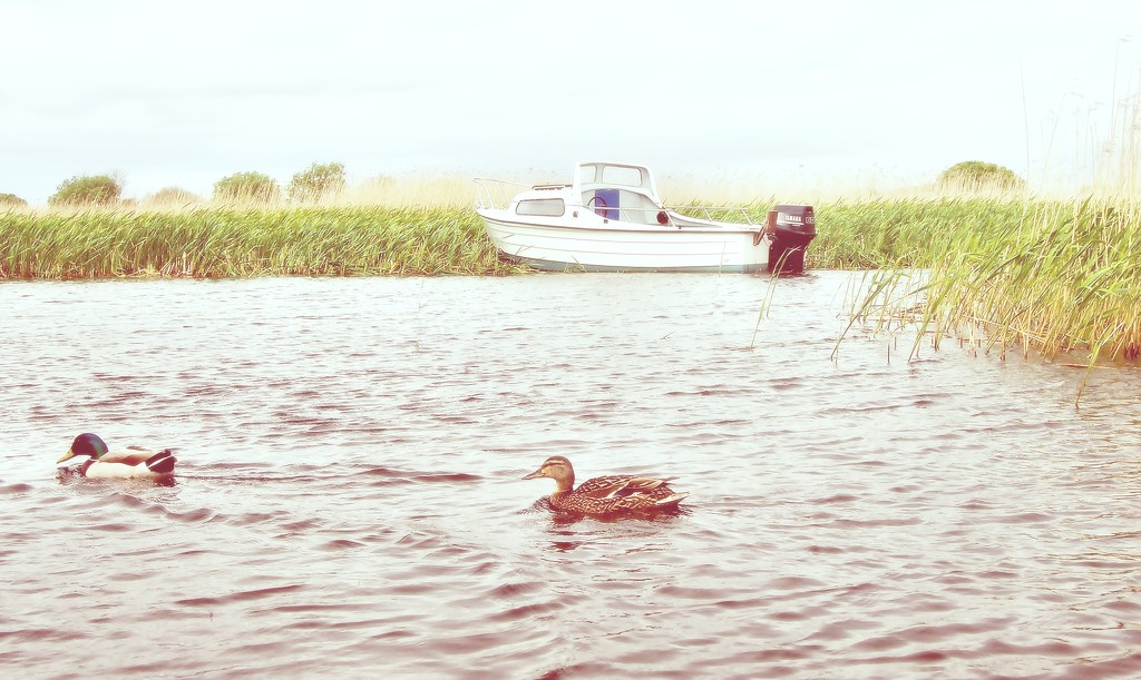 Boat with Ducks by jack4john