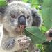 Crunchy bits by koalagardens