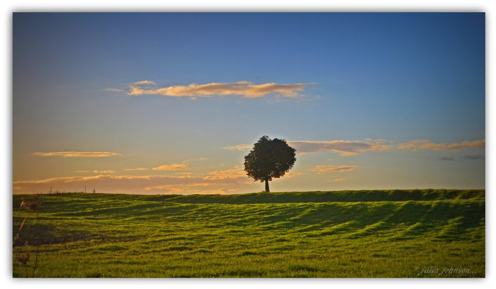 Lone Tree.. by julzmaioro