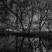 Pond edged by mangroves by peterdegraaff