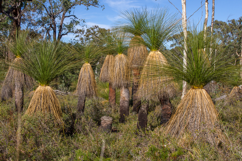 Family of grass tree by gosia