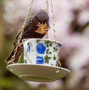 20th May 2015 - 20th May 2015 - Greedy bird!!