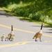 Mom Why Does Dad Walk So Fast ?