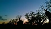 10th Nov 2010 - Moon Rise
