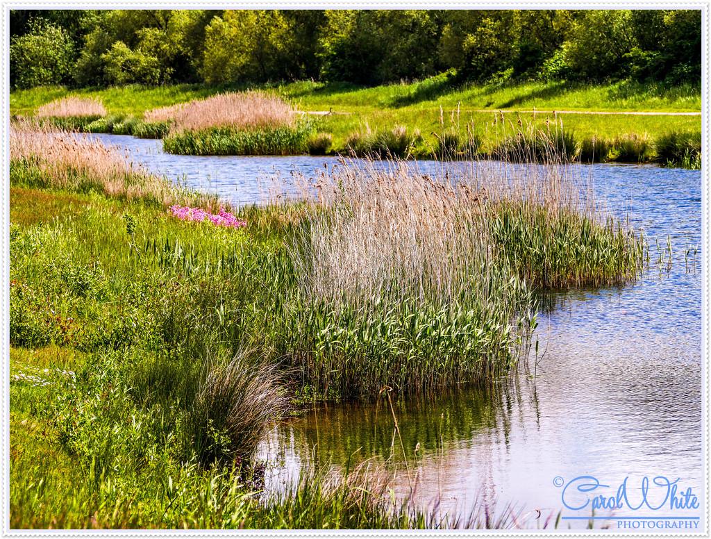 The Water's Edge by carolmw