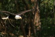 21st May 2015 - Eagle