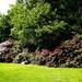 Enjoy the sun, enjoy the Rododendros