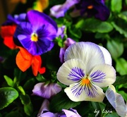 23rd May 2015 - Beauty of Flowers
