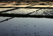 24th May 2015 - Salt pans at sunset