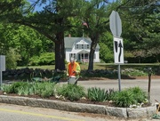 24th May 2015 - Garden Club traffic island planting