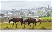 25th May 2015 - 25th  May 2015 - Horses