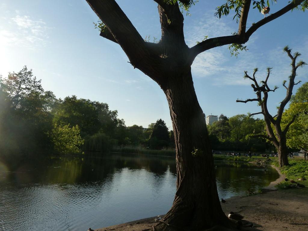 Park pond by boxplayer