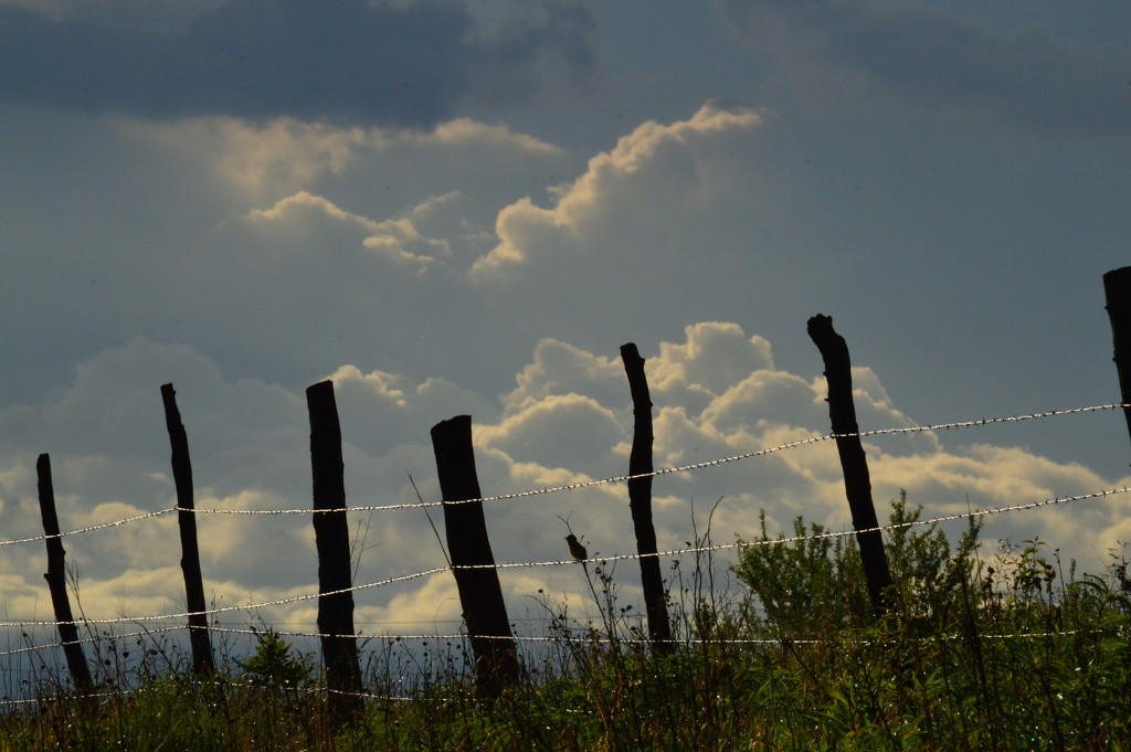 Fenceline and Cloudscape by kareenking