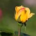 New Bloom....