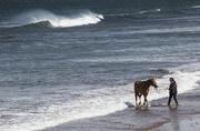 28th May 2015 - Sea horses